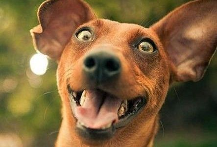Local Dog Needs To Get A Life [Satire]