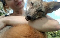 Meet Mikayla Raines: Fox Rescuer