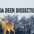 BHS Snapshot: ODA Deer Dissection