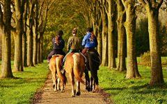 Horseback Hullabaloo